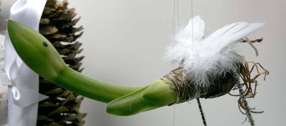 amaryllis-engelsfluegel-weihnachten