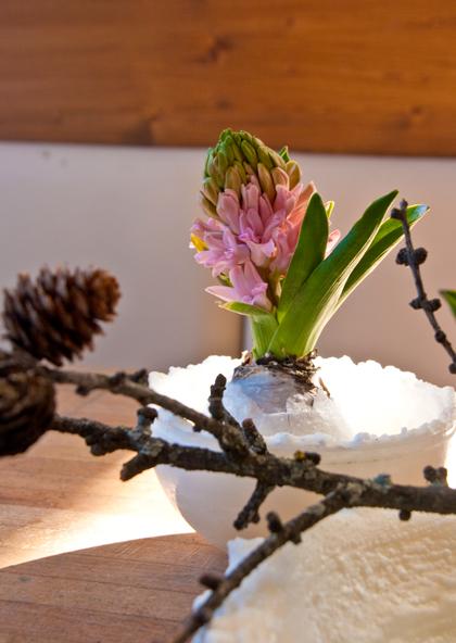 rosa_hyacinthe_gewachst