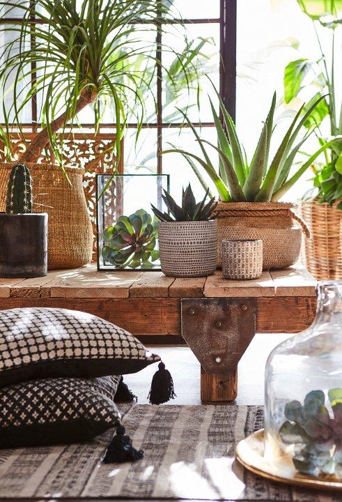 Zimmerpflanzen_Affari