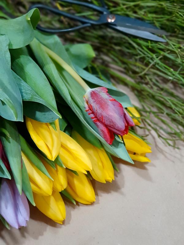 Tulpen_Frühling_Schnittblumen